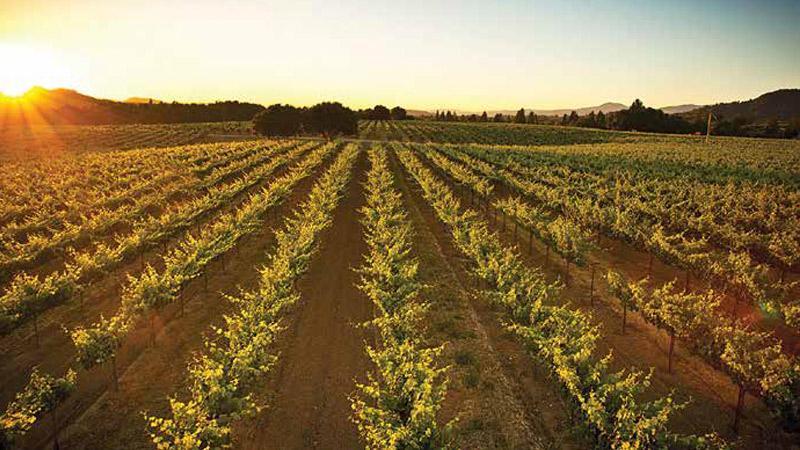 Wine Country Renewed